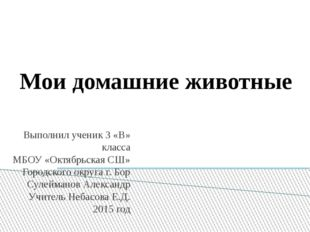 Мои домашние животные Выполнил ученик 3 «В» класса МБОУ «Октябрьская СШ» Горо