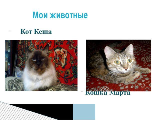 Кот Кеша Кошка Марта Мои животные