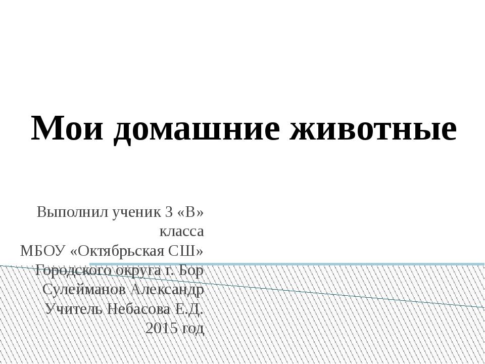 Мои домашние животные Выполнил ученик 3 «В» класса МБОУ «Октябрьская СШ» Горо...
