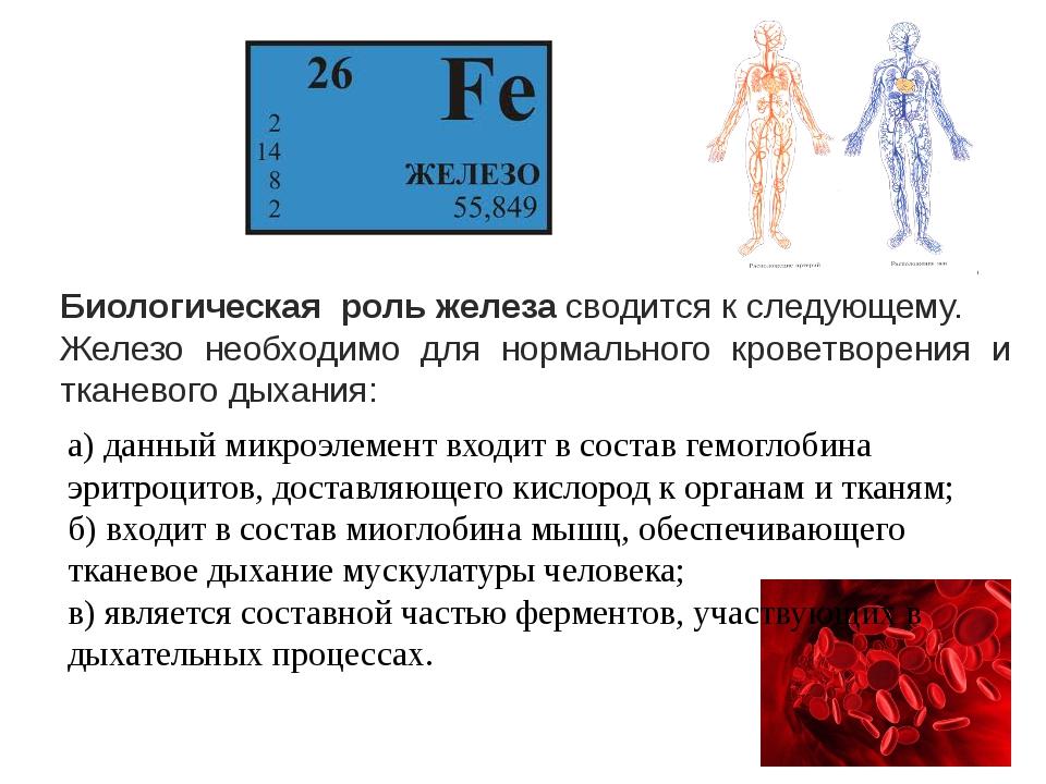 Биологическая роль железасводится к следующему. Железо необходимо для норма...