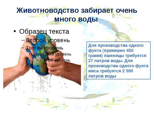 Животноводство забирает очень много воды Для производства одного фунта (приме...