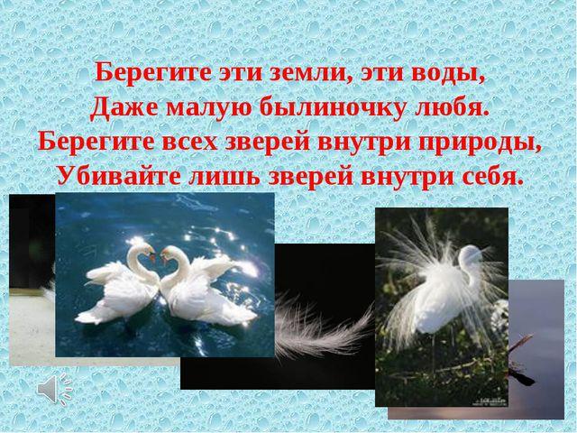 Берегите эти земли, эти воды, Даже малую былиночку любя. Берегите всех звере...