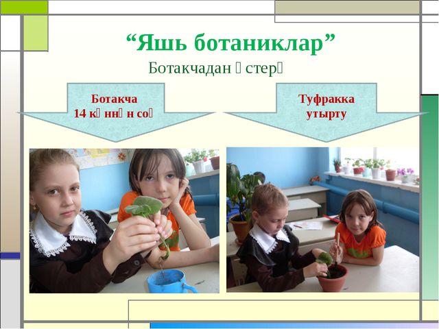 """""""Яшь ботаниклар"""" Ботакчадан үстерү"""