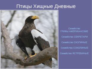 Птицы Хищные Дневные Семейство ГРИФЫ АМЕРИКАНСКИЕ Семейство СЕКРЕТАРИ Семейст