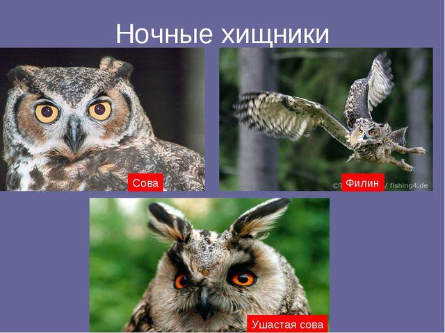 Ночные хищники Сова Филин Ушастая сова