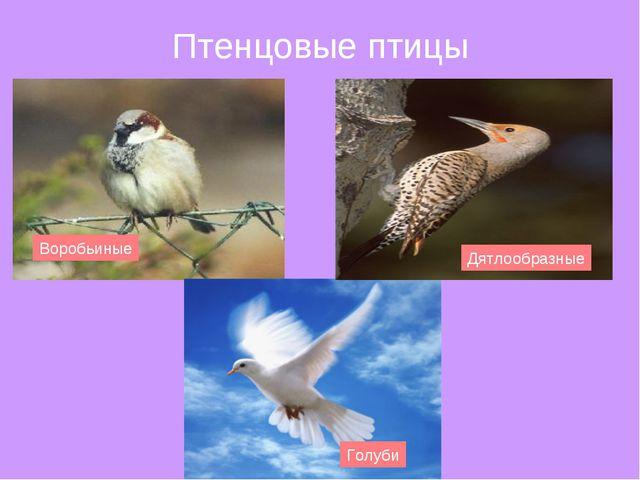 Птенцовые птицы Воробьиные Голуби Дятлообразные