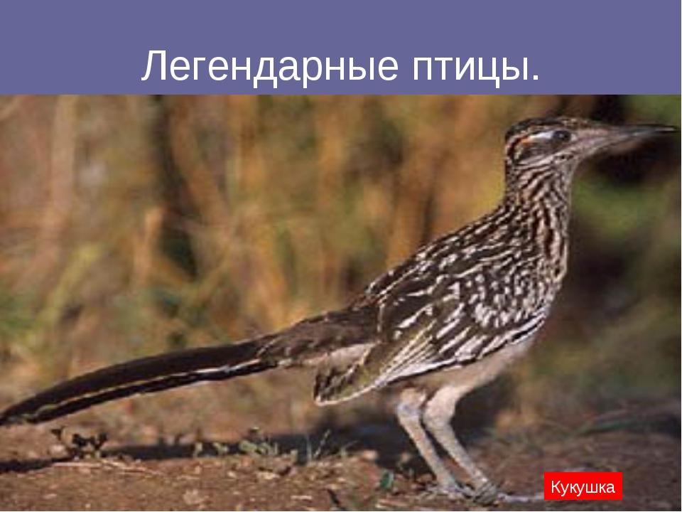 Легендарные птицы. Кукушка
