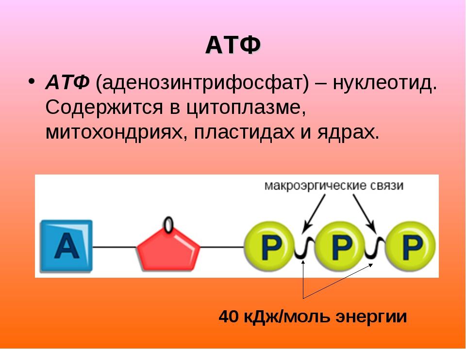 АТФ АТФ (аденозинтрифосфат) – нуклеотид. Содержится в цитоплазме, митохондрия...