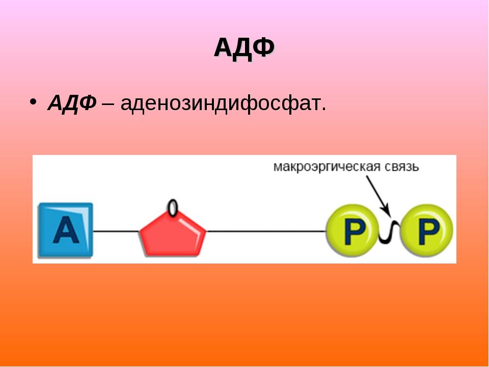 АДФ АДФ – аденозиндифосфат.