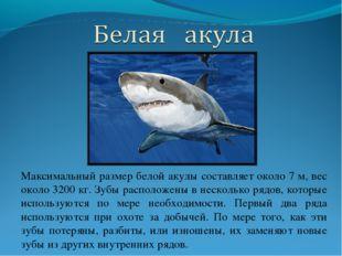 Максимальный размер белой акулы составляет около 7 м, вес около 3200 кг. Зубы