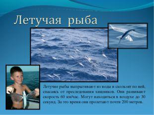 Летучие рыбы выпрыгивают из воды и скользят по ней, спасаясь от преследования