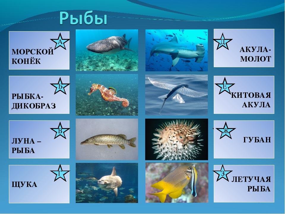 З Ж Д Ж Б Е В Г 8 7 6 5 4 3 1 А Е 8. Эта рыбка-санитар может безопасно плават...