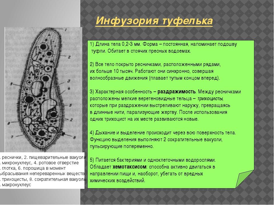 1) Длина тела 0,2-3 мм. Форма – постоянная, напоминает подошву туфли. Обитае...