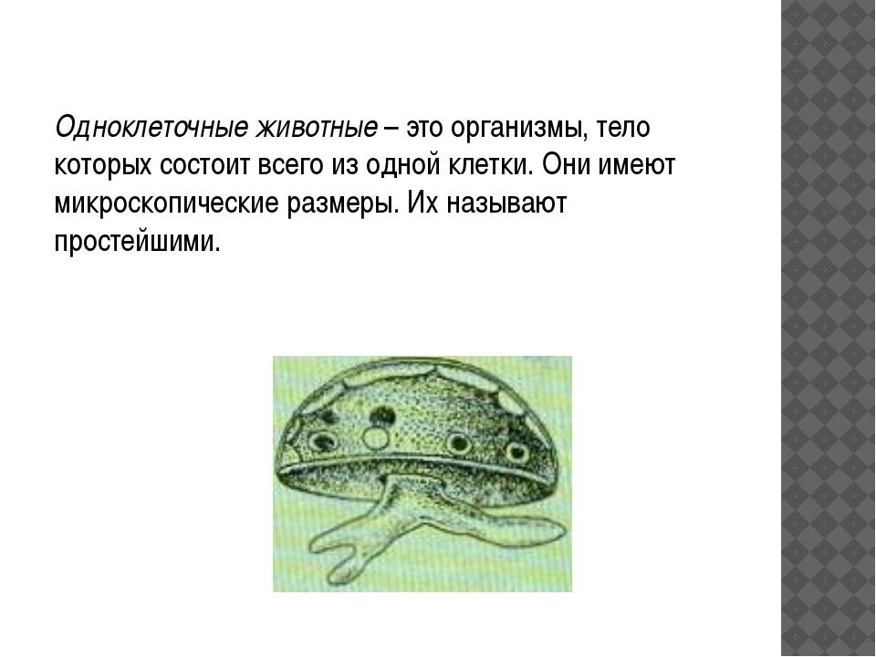 Одноклеточные животные – это организмы, тело которых состоит всего из одной к...