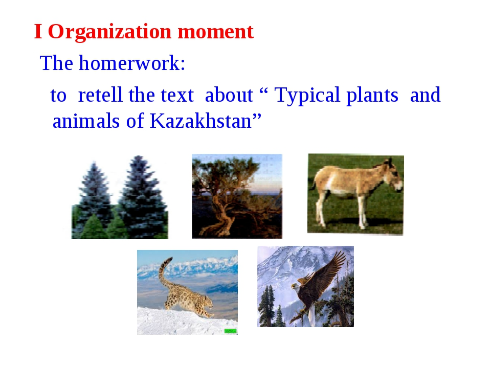 """I Organization moment The homerwork: to retell the text about """" Typical plant..."""