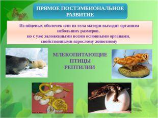 ПРЯМОЕ ПОСТЭМБИОНАЛЬНОЕ РАЗВИТИЕ Из яйцевых оболочек или из тела матери выхо