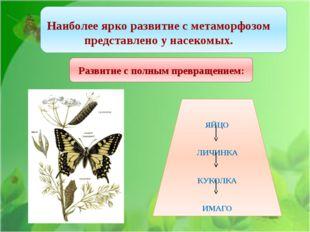 Наиболее ярко развитие с метаморфозом представлено у насекомых. Развитие с п
