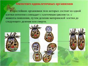 Онтогенез одноклеточных организмов У простейших организмов тело которых сост
