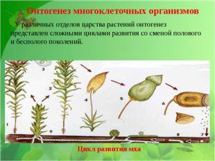 У различных отделов царства растений онтогенез представлен сложными циклами
