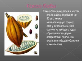 Какао-бобы находятся в мякоти плода какао-дерева по 30-50 шт., имеют миндалев