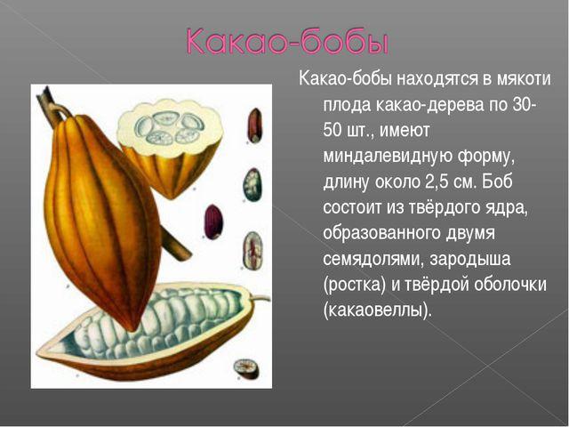 Какао-бобы находятся в мякоти плода какао-дерева по 30-50 шт., имеют миндалев...