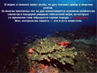В морях и океанах живут рыбы, по дну ползают крабы и морские улитки. За многи
