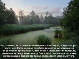 Вы, конечно, не раз видели мелкие озера или болота, вокруг которых растет лес