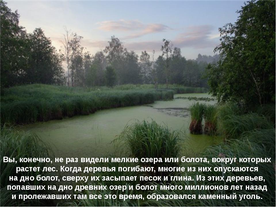 Вы, конечно, не раз видели мелкие озера или болота, вокруг которых растет лес...