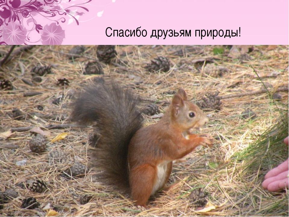 Спасибо друзьям природы!