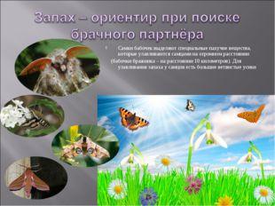 Самки бабочек выделяют специальные пахучие вещества, которые улавливаются сам