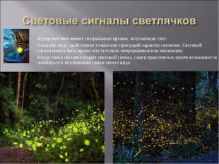 Жуки-светляки имеют специальные органы, излучающие свет. Каждому виду свойств