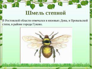 Шмель степной В Ростовской области отмечался в низовьях Дона, в Провальской с