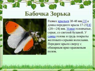 Размахкрыльев38-48мм,[3]а длина переднего крыла 17-23[4](20—24) мм. Усик