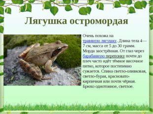 Очень похожа натравяную лягушку. Длина тела 4—7см, масса от 5 до 30 грамм.