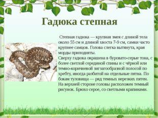 Степная гадюка— крупная змея с длиной тела около 55см и длиной хвоста 7-9