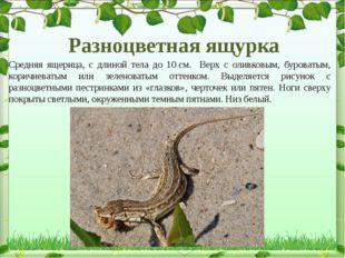 Разноцветная ящурка Средняя ящерица, с длиной тела до 10см. Верх с оливковым