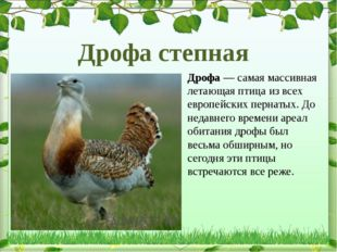 Дрофа— самая массивная летающая птица из всех европейских пернатых. До недав