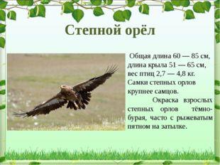 Общая длина 60— 85см, длина крыла 51— 65см, вес птиц 2,7— 4,8кг. Самки