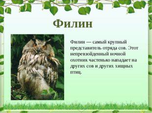 Филин — самый крупный представитель отряда сов. Этот непревзойденный ночной о
