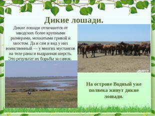 Дикие лошади. На острове Водный уже полвека живут дикие лошади. Дикие лошади