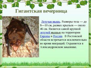 Летучая мышь. Размеры тела— до 8—10см, размах крыльев— около 46см. Явля