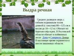 Средних размеров зверь с гибким подвижным телом длиной (с хвостом)80—125