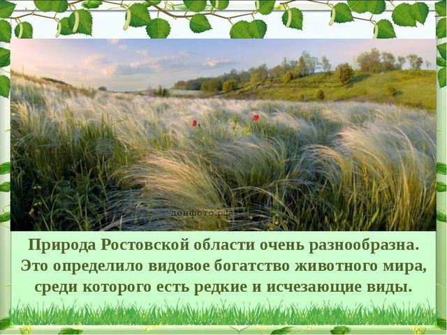 Природа Ростовской области очень разнообразна. Это определило видовое богатст...