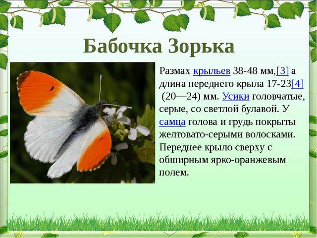 Размахкрыльев38-48мм,[3]а длина переднего крыла 17-23[4](20—24) мм. Усик...