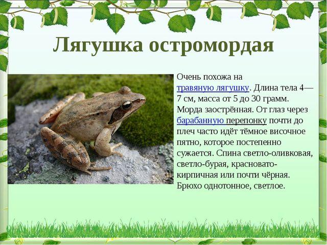 Очень похожа натравяную лягушку. Длина тела 4—7см, масса от 5 до 30 грамм....