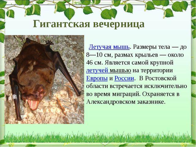 Летучая мышь. Размеры тела— до 8—10см, размах крыльев— около 46см. Явля...