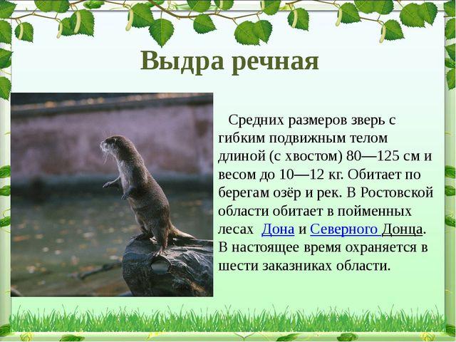 Средних размеров зверь с гибким подвижным телом длиной (с хвостом)80—125...