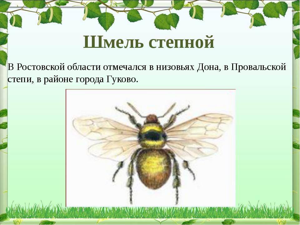 Шмель степной В Ростовской области отмечался в низовьях Дона, в Провальской с...