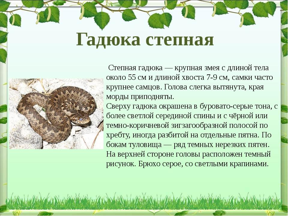 Степная гадюка— крупная змея с длиной тела около 55см и длиной хвоста 7-9...