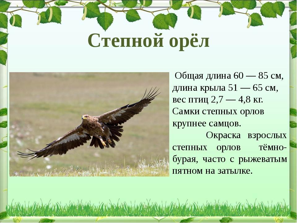 Общая длина 60— 85см, длина крыла 51— 65см, вес птиц 2,7— 4,8кг. Самки...